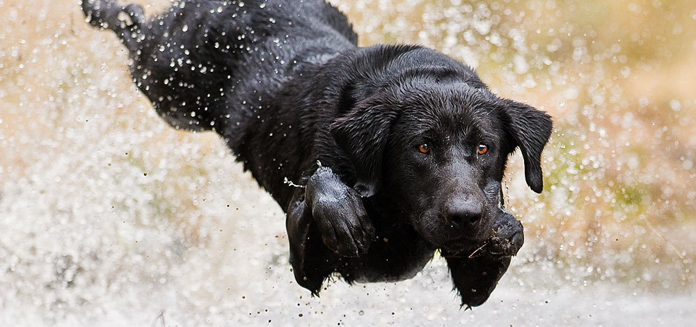 Mark Atwater - Dog, Nature and Wildlife Photography