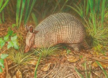 Armadillo miniature watercolor painting by Rachelle Siegrist