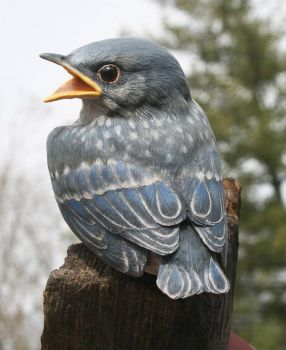Baby Bluebird wood carving by Randal Martin