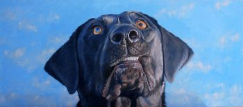Somewhere up There is a giclee print of a black lab looking up by Chris Chantland