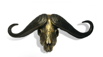 Buffalo Skull Paper Weight Bronze Sculpture by John Tolmay