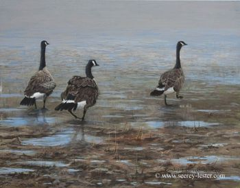 Shore Patrol is an original acrylic painting of Canada Geese by Suzie Seerey-Lester
