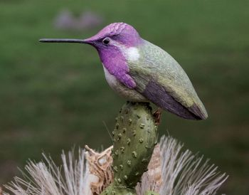 Costas Hummingbird wood carving by Randal Martin