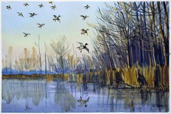 Dropping In - Original watercolor painting of Mallard ducks landing in a marsh by CD Clarke