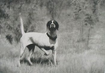 Elhew belle is a signed print of an Elhew English Pointer by Cole Johnson