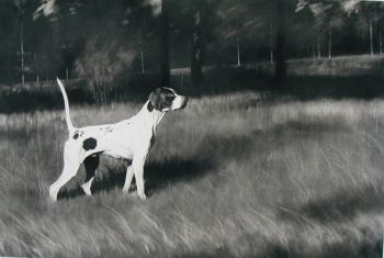 Elhew Fibber Mc Gee - a print of an Elhew English Pointer by Cole Johnson