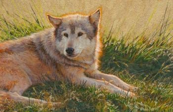Enjoying the Warm Sun - Wolf  Miniature Watercolor Painting