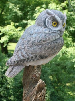 Grey Phase Screech owl wood carving by Randal Martin