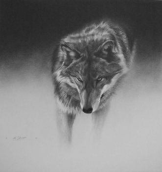 Gray Wolf Print from the original graphite by Cole Johnson