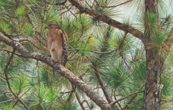 Hawk miniature painting by Wes Siegrist