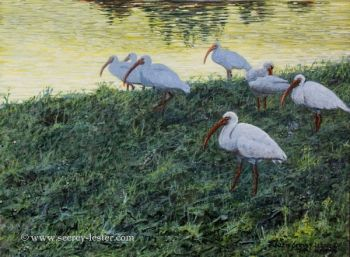 Twilight Ibis is the name of an original acrylic painting by Suzie Seerey-Lester