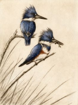 Kingfishers is a hand-colored etching by Melanie Fain