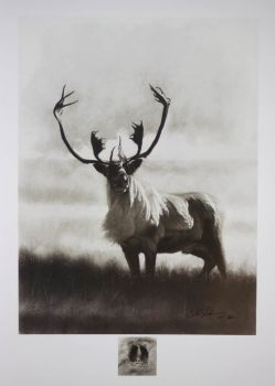 Bull Caribou Print by Cole Johsnon