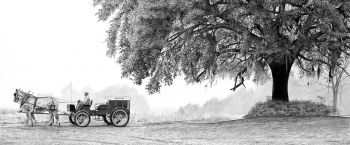 Quail wagon under a live oak giclee print by Chris Chantland