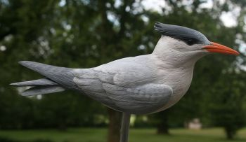 Royal Tern wood carving by Randal Martin