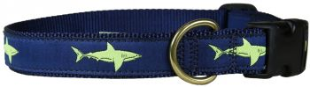 Belted Cow Shark one inch dog collar