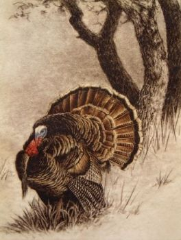 Southern Gentleman is a hand-colored etching of a wild turkey by Melanie Fain