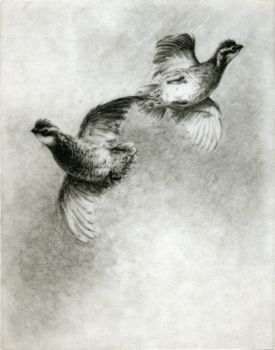 Spooked! is an etching of flushed Bob White quail by Melanie Fain