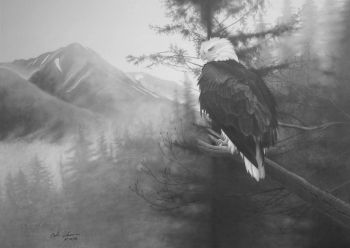 Bald Eagle limited edition NRA print by Cole Johnson