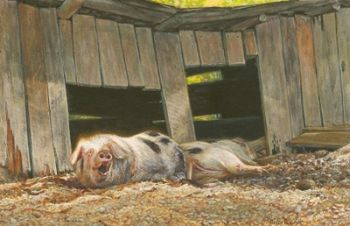 Hogs - Farm Pigs miniature watercolor painting by Wes Siegrist