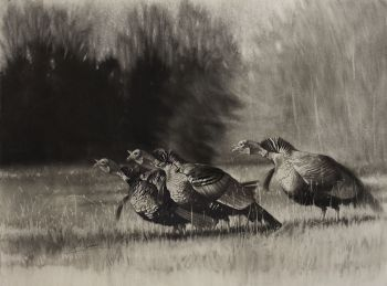 Wild Turkey print by Cole Johnson