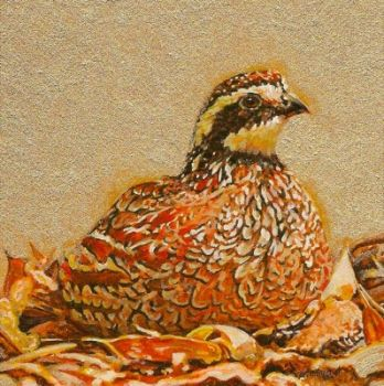 Bobwhite Quail miniature painting by Wes Siegrist