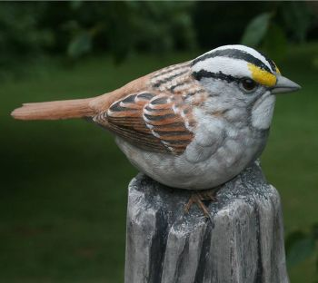 White Throated Sparrow wood carving by Randal Martin