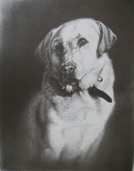 Yellow Lab portrait of Zeke - a limited edition print from the graphite of Cole Johnson